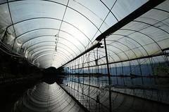 休耕期的果菜棚 / shed construct (Nagawa Ryou) Tags: fujifilm xe2s 南投 信義鄉 同富村 nantou 農業 agriculture 果菜棚 shed 溫室 greenhouse xf1024mm 南投縣