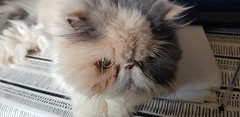2020-01-26_09-33-03 (M0JRA) Tags: cats pets feline animals