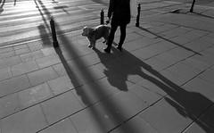 Lean into it (ewitsoe) Tags: analog analogue bnw grain monochrome nikonfm2 rolleirpx400 street warszawa winter erikwitsoe film warsaw dog woman walkingdog sheepdog mono light shadows crossing pedestrian sun cold