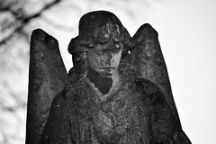 Angel (Sarah E Coulson) Tags: angel stone outside