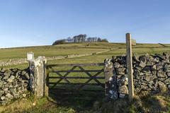Minninglow Hill (l4ts) Tags: landscape derbyshire peakdistrict whitepeak pikehall minninglowhill minninglow highpeaktrail gate drystonewall signpost permissivepath trees neolithicbronzeage roundcairn