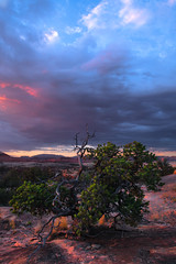 Lone Pine (Maddog Murph) Tags: lone pine monsoon needles national park canyon grand colorado river cone green blue pink first light dawn fine art photography nature trees tree pinetree natural travel remote desert arid storm thunder clouds cloudy