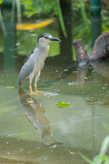 A7R08415 (cpw123) Tags: taman mini bird park tmii jakarta sony a7rii sal70300g laea3 birds burung swan pellican peakcock ducks baby cassowary