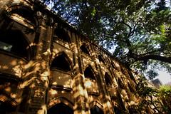'Light' play ! (Debmalya Mukherjee) Tags: light shadow silhouette trees mumbai debmalyamukherjee canon550d 1018mm heritage