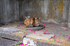 K_1_1325 (Manbow3) Tags: cat cats
