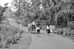The soul of India... (Anuradha Nautiyal) Tags: streetphotography village bullockcart malnadu sirsi karnataka india cart vilagekids rural scene villagelife children running nikond90 nikon d90 westernghats rurallife