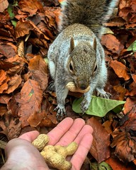 AZGP8140 (tonywinward2) Tags: squirrels squirrel museum gardens york yorkshire north east northern england uk united kingdom heart nuts wildlife leaves leaf autumn feeding park
