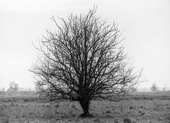 lonely tree (matwolf) Tags: tree nature natur baum arbre monochrome mono outside blackandwhite noiretblanc schwarzweis