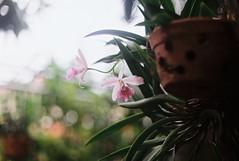 1st Roll (AniaRovana) Tags: film filmcamera nikonf kodak proimage 100 nikon thailand nostalic manualfocus manualcamera manual filmisnotdead