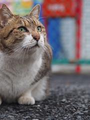 P1262337 (ataru_mix) Tags: cats tamrona09
