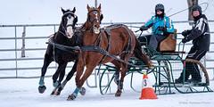 Winter Derby 2020 #11 (GilBarib) Tags: winterderby winter gilbarib xf200mm horses chevaux xf200mmf20rlmoiswr derby xt3sport fujinon sleigh xt3 cheval ladaq gillesbaribeauphoto fujifilm sport sleighracing fujixsport attelage fujix traîneaux