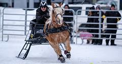 Winter Derby 2020 #12 (GilBarib) Tags: winterderby winter gilbarib xf200mm horses chevaux xf200mmf20rlmoiswr derby xt3sport fujinon sleigh xt3 cheval ladaq gillesbaribeauphoto fujifilm sport sleighracing fujixsport attelage fujix traîneaux