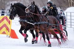 Winter Derby 2020 #17 (GilBarib) Tags: winterderby winter gilbarib xf200mm horses chevaux xf200mmf20rlmoiswr derby xt3sport fujinon sleigh xt3 cheval ladaq gillesbaribeauphoto fujifilm sport sleighracing fujixsport attelage fujix traîneaux