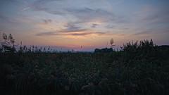 neusiedel_evening_03 (rhomboederrippel) Tags: rhomboederrippel fujifilm xe1 august 2019 europe austria burgenland neusiedlamsee summer eveninglight sunset lake neusiedlersee water reed green blue orange cloud