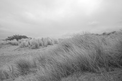 endless victories (Alexandre Dulaunoy) Tags: endlessvictories seascape landscape belgium belgique belgitude sand beach