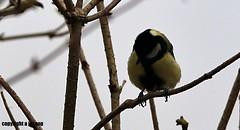 J78A0507 (M0JRA) Tags: kiveton woodland walks people birds trees woods sky clouds fields