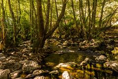 RÍO GUADALIX (bacasr) Tags: sanagustíndelguadalix comunidaddemadrid españa spain river río arroyo creek mounts montes nature naturaleza trees árboles hiking senderismo forest bosque