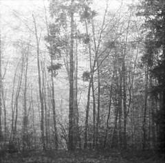 Winter of 2014 (iascic) Tags: winter window medium format efke100