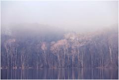 down by the lake (derkleinebiber) Tags: lake seascape schweiz brandenburg buckow märkische schermützelsee trees fog forest sunrise woodland haze nebel lakes dreamy sonnenaufgang