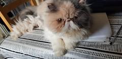 Tinker (M0JRA) Tags: cats pets feline