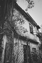 Ma Wan, Hong Kong (a.pierre4840) Tags: olympus om2sp zuiko 24mm f28 35mmfilm ilford ilfordfp4 fp4 bw blackandwhite noiretblanc abandoned derelict ruined decay tree hongkong fotor