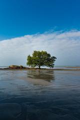 Lone tree (Ajai Arif) Tags: water beach sea nature landscape sky sand sunset summer seascape vertical blue colorimage wide nopeople sun sunny sunrisedawn watersedge outdoors coastline wideshot wideangle nonurbanscene day scenicsnature sony a6300 selp1650
