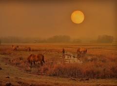PFERDE IN 2020 MIT SONNE (hlh 1960) Tags: pferde horses nature natur landschaft landscape winter nebel fog wasser water weide sun sunrise sonne sonnenaufgang sol soleil atardecer gras trees bäume hütte forrest