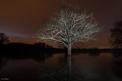 DSC05217 (christophe.perraud.44310) Tags: light painting landscape trees arbre lacdegrandlieu lake led