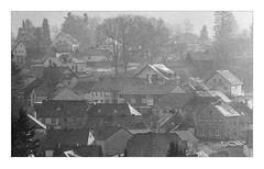 Film grain - Winter morning, Kell am See (werner-marx) Tags: analog film meinfilmlab 35mm canonftb ilforddelta3200 kellamsee filmgrain