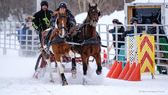 Winter Derby 2020 #18 (GilBarib) Tags: winterderby winter gilbarib xf200mm horses chevaux xf200mmf20rlmoiswr derby xt3sport fujinon sleigh xt3 cheval ladaq gillesbaribeauphoto fujifilm sport sleighracing fujixsport attelage fujix traîneaux