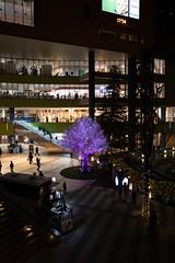 Q1020849 (Zengame) Tags: leica summilux tokyodomecity event illumination japan leicaq2 summilux1728 tokyo イベント イルミネーション ズミルックス ズミルックス1728 ライカ ライカq2 日本 東京 東京ドームシティ 東京都