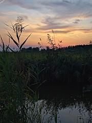 neusiedel_evening_02 (rhomboederrippel) Tags: rhomboederrippel fujifilm xe1 august 2019 europe austria burgenland neusiedlamsee summer eveninglight sunset lake neusiedlersee water reed green blue orange cloud