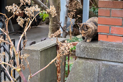 K_1_1312 (Manbow3) Tags: cat cats