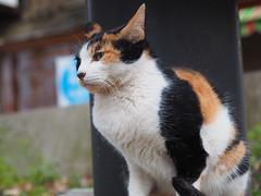 P1262360 (ataru_mix) Tags: cats tamrona09