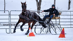 Winter Derby 2020 #5 (GilBarib) Tags: winterderby winter gilbarib xf200mm horses chevaux xf200mmf20rlmoiswr derby xt3sport fujinon sleigh xt3 cheval ladaq gillesbaribeauphoto fujifilm sport sleighracing fujixsport attelage fujix traîneaux