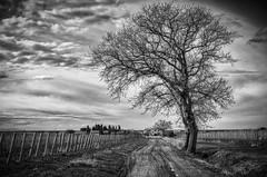 winter (lotti roberto) Tags: bolgheri toscana tree storm sky clouds fields fav25 fav50