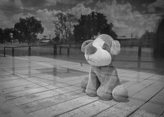 A Lonely Puppy (jrpopfan) Tags: abandonedplaces rebelt3 plush luling street exploration urbandecay canon explore mainstreet leftbehind urban texas monochrome abandoned digital photography middleamerica dog blackandwhitephotography bw blackandwhite shadows streetphotography