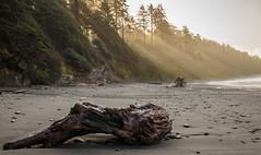 God Rays in the Fog (CloudRipR) Tags: beach sun sunshine log trees fog washington olympicnationalpark beach4 nikon d810 nikkor