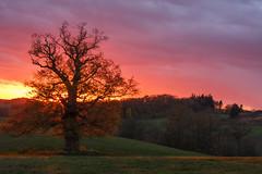 The old tree (renatecamin) Tags: baum tree autumn herbst mecklenburg landschaft landscape natur nature sunset sonnenuntergang