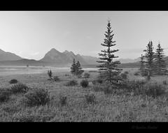 mellow morning (Gordon Hunter) Tags: nature wilderness outside outdoors trees bw mono calm mellow simple landscape morning nikon d5000 gordon hunter ab canada summer