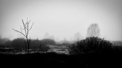 Hohes Venn / Eifel (PHOTOGRAPHY Toporowski) Tags: eifel moor cold landscape landschaft kalt schnee eifelliebe hohesvenn winter belgien begium mützeneich monschau outside nature blackandwhite