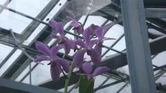 Jardin des plantes - Rouen - 26-01-2020 (jeanlouisallix) Tags: rouen seine maritime haute normandie france jardin des plantes garden nature