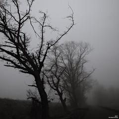 Vents d'ouest dominants (Un jour en France) Tags: canoneos6dmarkii canonef1635mmf28liiusm carré noiretblanc noiretblancfrance brume black