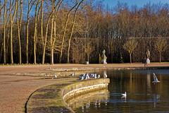 Bassin d'Apollon (Chrisar) Tags: angénieux2870 dxophotolab3 matin nikond750 parc versailles