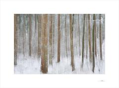 Waldgeist (E. Pardo) Tags: waldgeist bosque forest wald winter invierno árboles trees bäume formas formen forms nieve snow schnee
