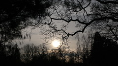 Jardin des plantes - Rouen - 26-01-2020 (jeanlouisallix) Tags: rouen seine maritime haute normandie france jardin des plantes garden nature claireobscure soleil couchant sunset paysage landscape