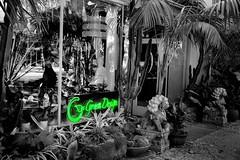 Go Green (Bob_Wall) Tags: bobwall btwgf blackandwhite monochrome selectivecoloring neon sign storefront sanjose