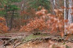 Januar im Wald unterwegs und fotografieren (trixi.mi) Tags: wälder deutsche wanderung bäume farben trees canon january winter