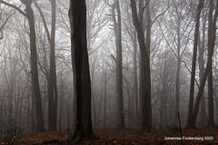 Nebel im Buchenwald (grafenhans) Tags: sony alpha 68 a68 alpha68 slt sal 18135 nebel wald baum bäume grafenwald bottrop nrw natur landschaft landscape licht light