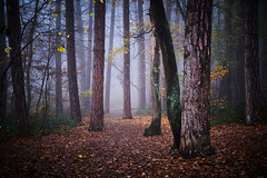 Foggy winter days.. (paul.wienerroither) Tags: woods forest austria winter mood fog foggy cold photography fujifilm xt3 fuji fujifilmxt3 35mm fujinon35mm nature naturephotography wanderer vienna colors colours beautiful spooky magicalforest prime primes primelens wood walking scary follow leaves